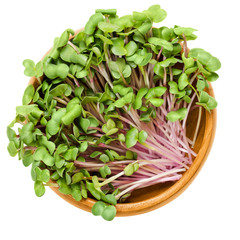 China Rose radish sprouts in wooden bowl. Cotyledons of Raphanus sativus. Chinese winter radish leaves with rose colored skin. Vegetable. Microgreen. Macro food photo close up from above over white.