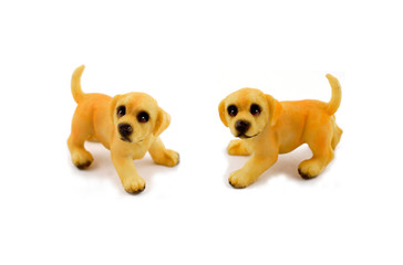Puppy stock images. Retriever puppy on a white background