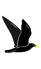 Picture of the flying bird silhouette