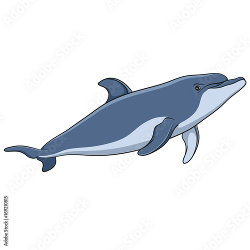 Color vector image of a dolphin. Isolated object on white background.