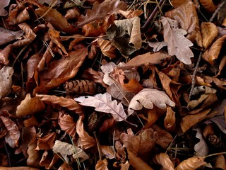 Mosaic of Autumnal Leaves in the Woods