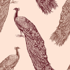 pattern of the drawn peacocks