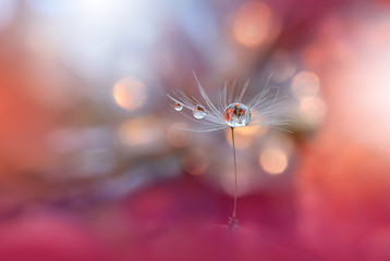 Abstract macro photo with dandelion and water drops.Artistic Background .Flowers made with pastel tones.Tranquil abstract closeup art photography.Print for Wallpaper.Floral fantasy design.
