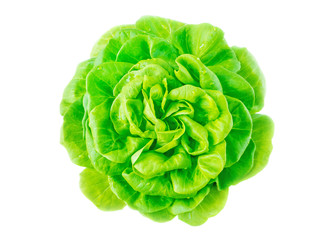 Lettuce salad head with water drops