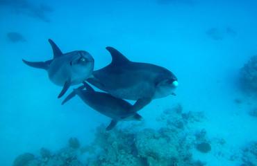 underwater photos, macro photography, sea animals