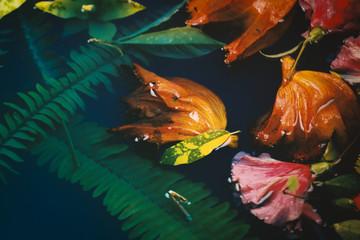 acuatic flower
