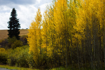 Orange, yellow, green, and brown trees during fall in Colorado