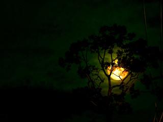 moon light silhouette tree in the dark night