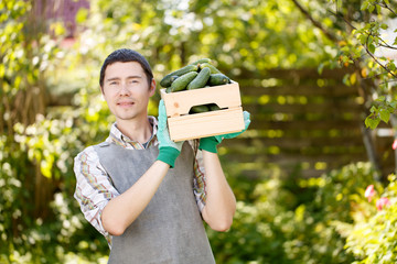 Agronomist with box of cucumbers