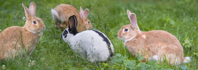 cute rabbits in the garden - close up