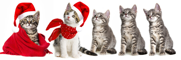 cute kittens with a red santa cap
