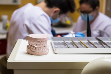 Jaw sample and tools placed on background of dentists working with client.
