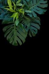 Tropical leaves decoration on black background, fern, monstera, and lemon lime dracaena.