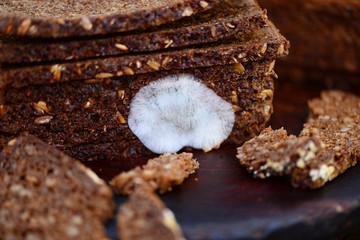 Brot Schimmel