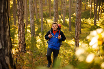 Hiker man walks in a pine yellow autumn forest. Backpacker enjoys golden fall landscape and lloks to the camera.