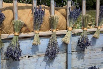 Bouquets de lavande en Provence