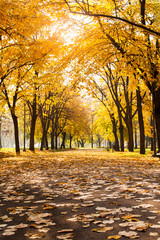 Park covered in fallen leaves, autumn scene