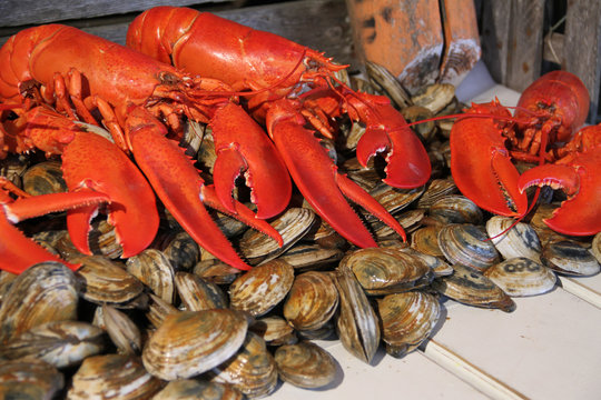 Cooked Lobster& Clams
