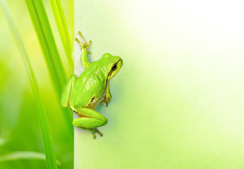 Creative natural background with a green frog and place for text. Original natura background with a green frog and plants close-up macro.