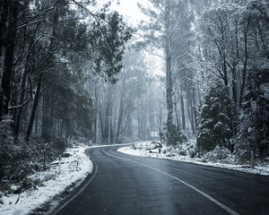 Snow on Trees and Roads in Mountains