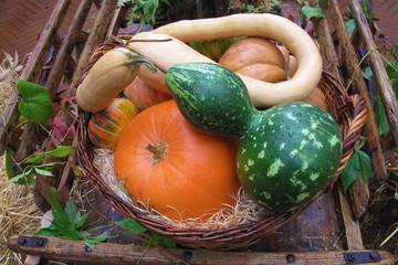 composizione mostra di frutta e verdura