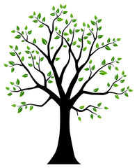 Tree with green leaves. Vector illustration