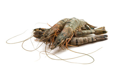 fresh shrimp isolated