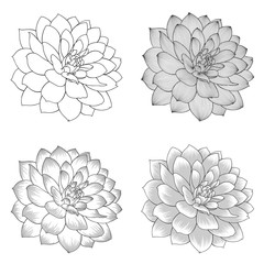 Set of monochrome abstract hand-drawn dahlia flowers.