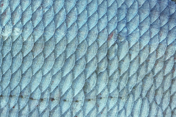 Bream fish scales, toned