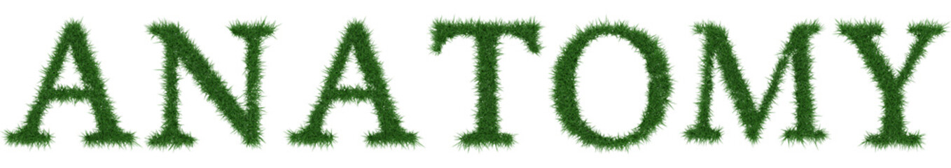 Anatomy - 3D rendering fresh Grass letters isolated on whhite background.