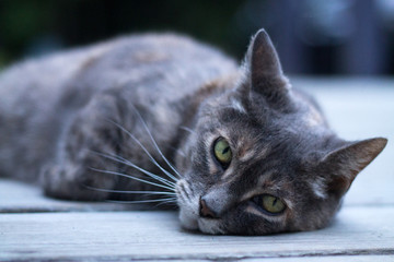 Cat-close-up-1