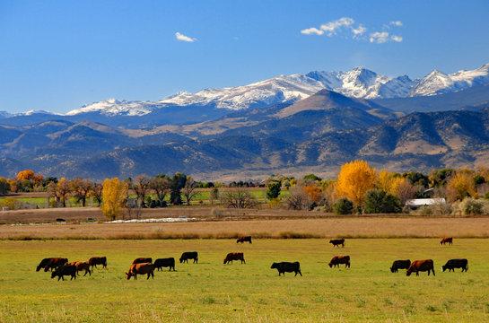 Cattle ranch near Boulder, Colorado