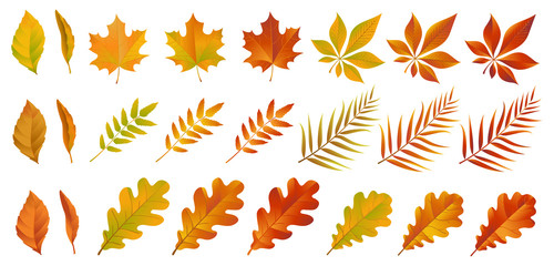 Set of colorful autumn leaves. Yellow and red dry foliage isolated on white background. Vector eps 10. Wall mural