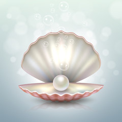 Realistic vector beautiful natural open sea pearl shell closeup with reflection. Design template, clipart, icon or mockup in EPS10.