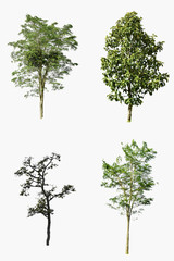 Collection of beautiful green trees isolated on white background.