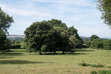 大きな木がある風景