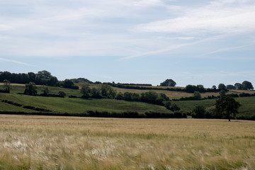イギリスの田園風景