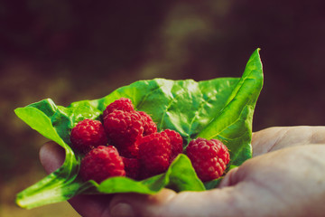 Rasberry with green leaf on a female hand close up
