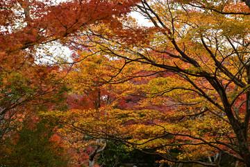 紅葉が溢れる風景