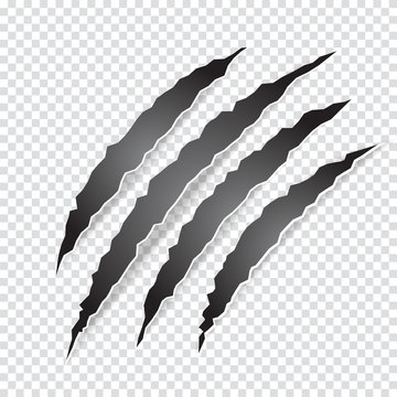 Claws scratches animal or monster on transparent background. Vector illustration.