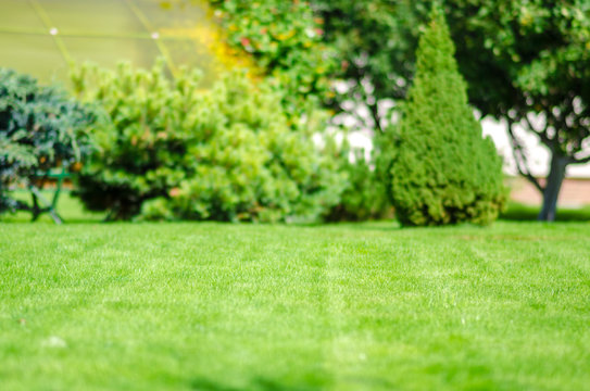 ideal green lawn back yard anl almond