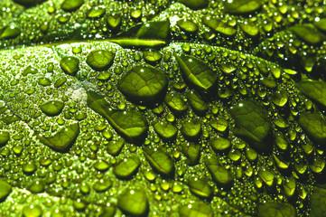 Krople wody z bliska na zielonych liściach drzewa. Zdjęcie makro