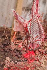 Carcase of sheep sacrificed for Eid Al-Adha (Sacrifice Feast).