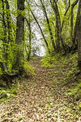 Foresta, Albero, Luce solare, Sole, Bosco, Verde, Natura