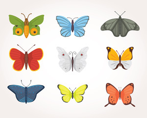 set of colorful Butterfly Vector Design Illustration. summer insect