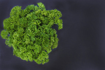 beautiful green parsley bunch on slate