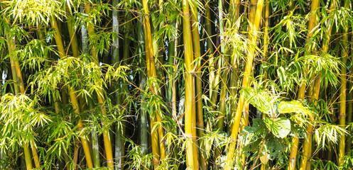 Fundo com bambu.