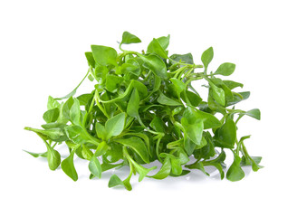 Foto auf Gartenposter Kräuter watercress isolated on white background