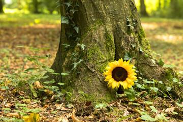 Urnengrab mit Sonnenblume, Bienwaldruhe Kandel