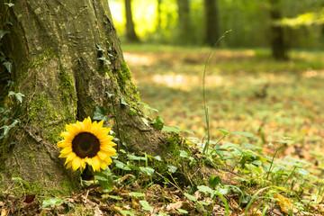 Waldfriedhof mit Sonnenblume